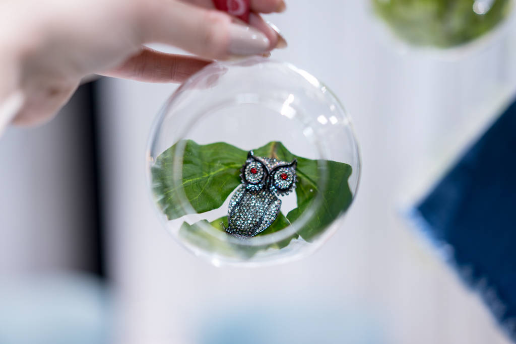 The Owls Are Not What They Seem (but they sure are cute)